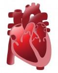 Sport ist gut fürs Herz, Bluthochdruck schlecht